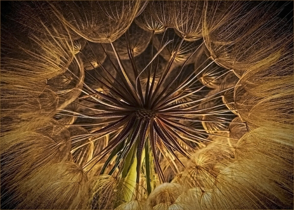 Inside the Dandelion